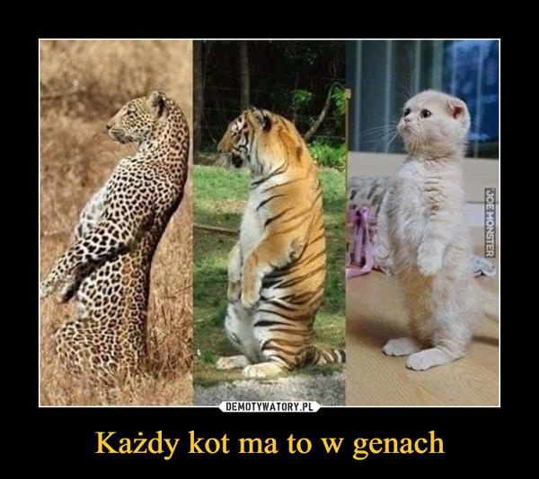 Każdy kot ma to w genach –