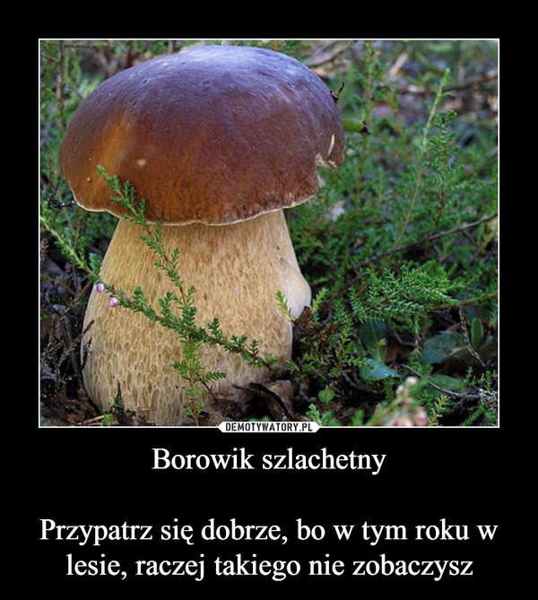 Borowik szlachetnyPrzypatrz się dobrze, bo w tym roku w lesie, raczej takiego nie zobaczysz –