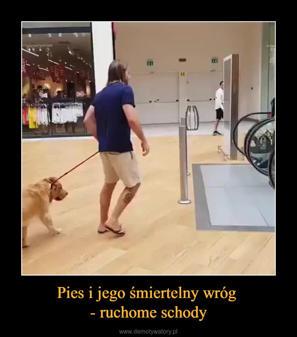 Pies i jego śmiertelny wróg - ruchome schody –