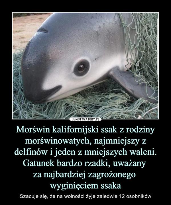 Morświn kalifornijski ssak z rodziny morświnowatych, najmniejszy z delfinów i jeden z mniejszych waleni. Gatunek bardzo rzadki, uważany za najbardziej zagrożonego wyginięciem ssaka – Szacuje się, że na wolności żyje zaledwie 12 osobników