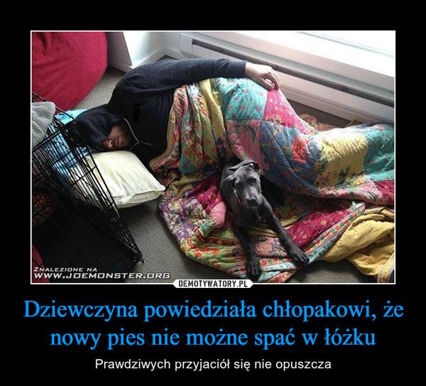 Dziewczyna powiedziała chłopakowi, że nowy pies nie możne spać w łóżku – Prawdziwych przyjaciół się nie opuszcza