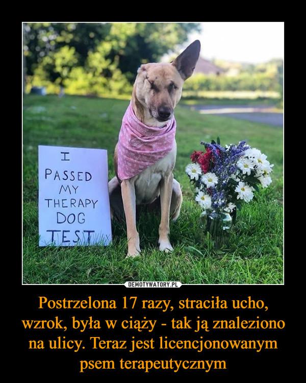 Postrzelona 17 razy, straciła ucho, wzrok, była w ciąży - tak ją znaleziono na ulicy. Teraz jest licencjonowanym psem terapeutycznym –