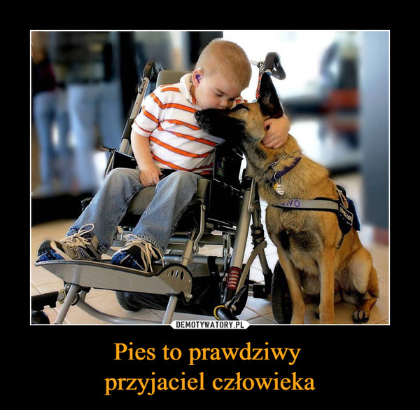 Pies to prawdziwy przyjaciel człowieka –