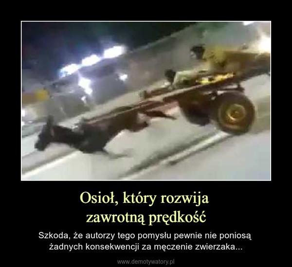 Osioł, który rozwija zawrotną prędkość – Szkoda, że autorzy tego pomysłu pewnie nie poniosą żadnych konsekwencji za męczenie zwierzaka...