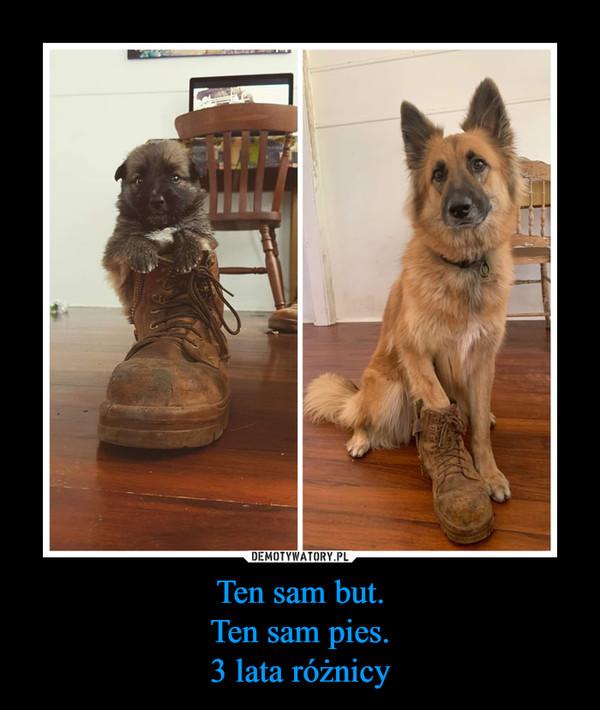 Ten sam but.Ten sam pies.3 lata różnicy –