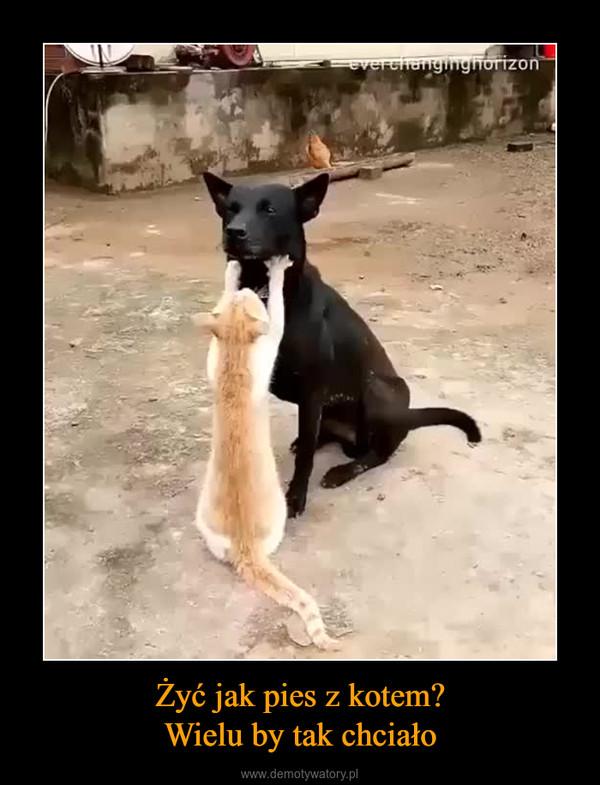 Żyć jak pies z kotem?Wielu by tak chciało –
