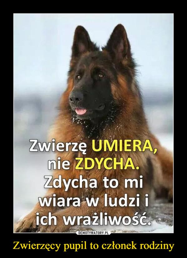 Zwierzęcy pupil to członek rodziny –  Zwierzę UMIERA, nie ZDYCHA. Zdycha to mi wiara w ludzi i ich wrażliwość.