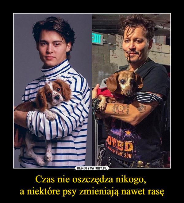 Czas nie oszczędza nikogo, a niektóre psy zmieniają nawet rasę –