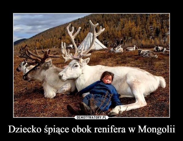 Dziecko śpiące obok renifera w Mongolii –