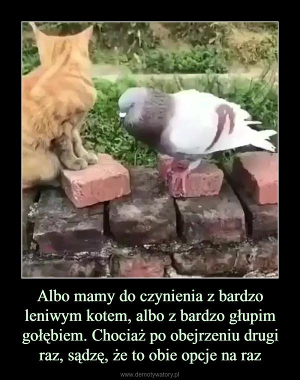 Albo mamy do czynienia z bardzo leniwym kotem, albo z bardzo głupim gołębiem. Chociaż po obejrzeniu drugi raz, sądzę, że to obie opcje na raz –