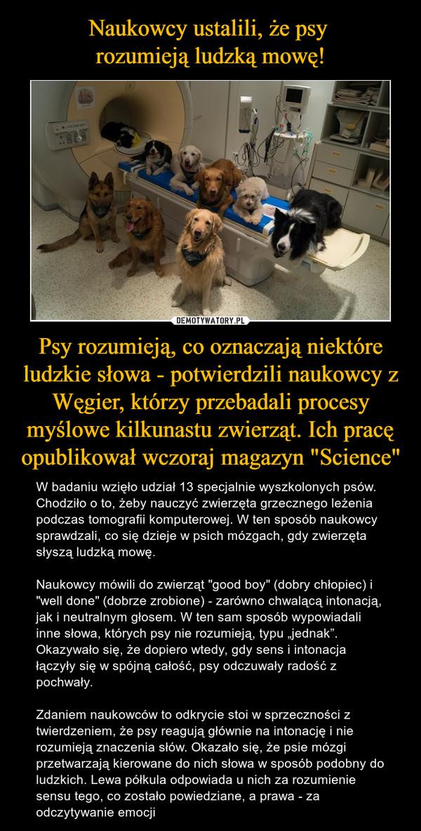 """Psy rozumieją, co oznaczają niektóre ludzkie słowa - potwierdzili naukowcy z Węgier, którzy przebadali procesy myślowe kilkunastu zwierząt. Ich pracę opublikował wczoraj magazyn """"Science"""" – W badaniu wzięło udział 13 specjalnie wyszkolonych psów. Chodziło o to, żeby nauczyć zwierzęta grzecznego leżenia podczas tomografii komputerowej. W ten sposób naukowcy sprawdzali, co się dzieje w psich mózgach, gdy zwierzęta słyszą ludzką mowę.Naukowcy mówili do zwierząt """"good boy"""" (dobry chłopiec) i """"well done"""" (dobrze zrobione) - zarówno chwalącą intonacją, jak i neutralnym głosem. W ten sam sposób wypowiadali inne słowa, których psy nie rozumieją, typu """"jednak"""". Okazywało się, że dopiero wtedy, gdy sens i intonacja łączyły się w spójną całość, psy odczuwały radość z pochwały.Zdaniem naukowców to odkrycie stoi w sprzeczności z twierdzeniem, że psy reagują głównie na intonację i nie rozumieją znaczenia słów. Okazało się, że psie mózgi przetwarzają kierowane do nich słowa w sposób podobny do ludzkich. Lewa półkula odpowiada u nich za rozumienie sensu tego, co zostało powiedziane, a prawa - za odczytywanie emocji"""