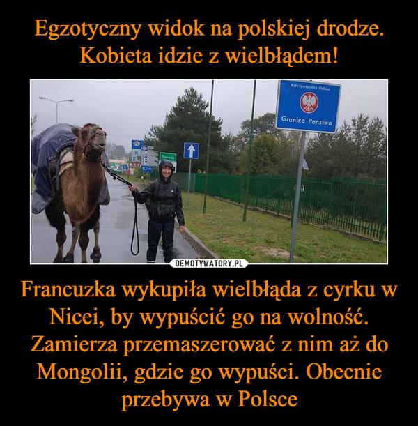 Francuzka wykupiła wielbłąda z cyrku w Nicei, by wypuścić go na wolność. Zamierza przemaszerować z nim aż do Mongolii, gdzie go wypuści. Obecnie przebywa w Polsce –