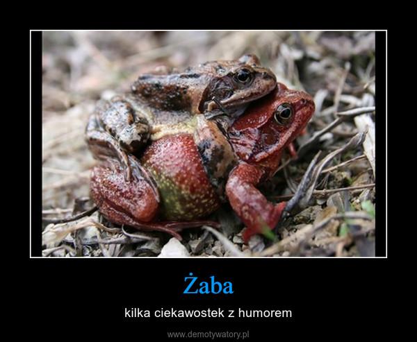 Żaba – kilka ciekawostek z humorem