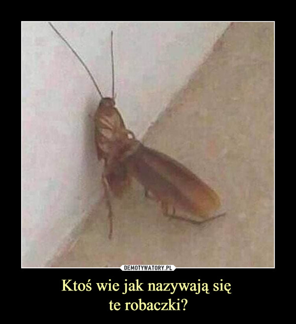 Ktoś wie jak nazywają się te robaczki? –