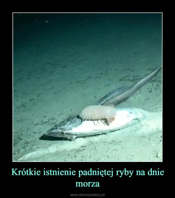 Krótkie istnienie padniętej ryby na dnie morza –