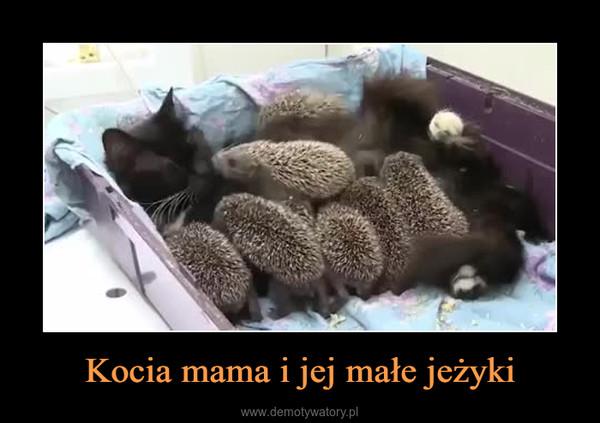 Kocia mama i jej małe jeżyki –