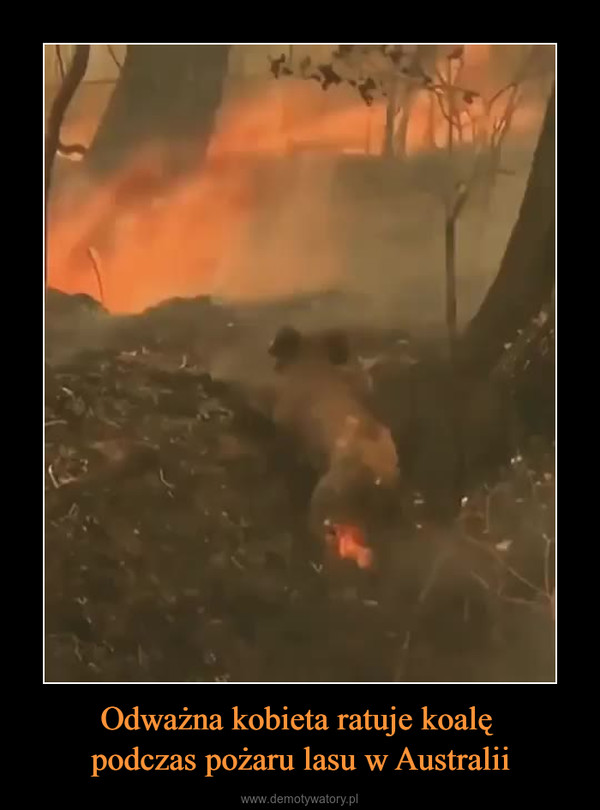 Odważna kobieta ratuje koalę podczas pożaru lasu w Australii –