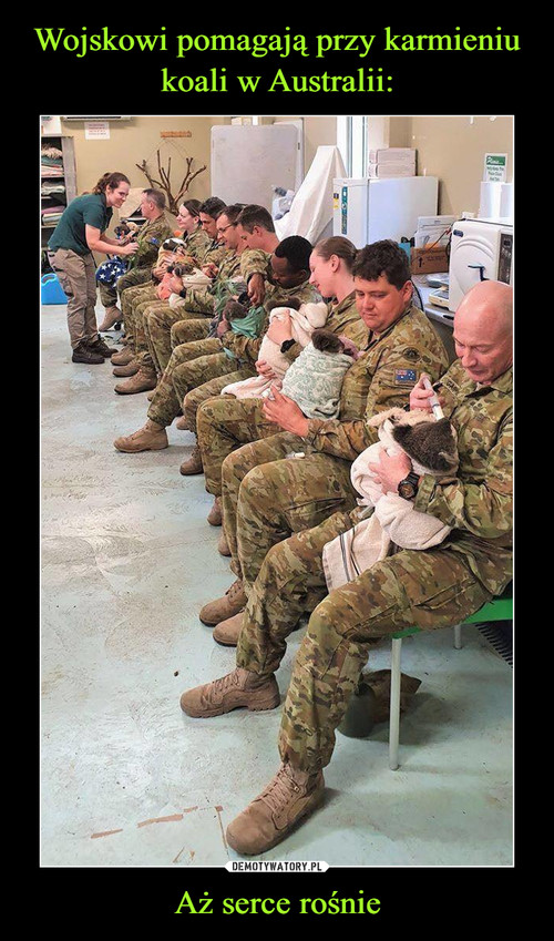 Wojskowi pomagają przy karmieniu koali w Australii: Aż serce rośnie