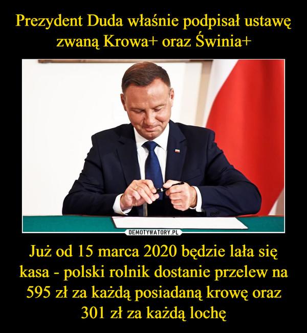 Już od 15 marca 2020 będzie lała się kasa - polski rolnik dostanie przelew na 595 zł za każdą posiadaną krowę oraz 301 zł za każdą lochę –