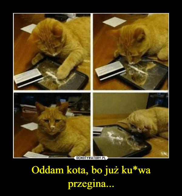Oddam kota, bo już ku*wa przegina... –