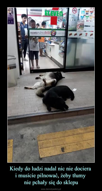Kiedy do ludzi nadal nic nie dociera i musicie pilnować, żeby tłumy nie pchały się do sklepu –