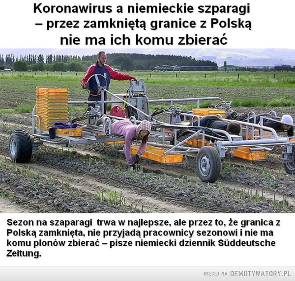 Gdy uchodźcy nagle zniknęli –  Koronawirus a niemieckie szparagi - przez zamkniętą granice z Polską nie ma ich komu zbierać Sezon na szaparagi trwa w najlepsze. ale przez to. że granica z Polską zamknięta. nie przyjadą pracownicy sezonowi i nie ma komu plonów zbierać — pisze niemiecki dziennik Siiddeutsche Zeitung.