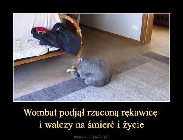 Wombat podjął rzuconą rękawicę i walczy na śmierć i życie –