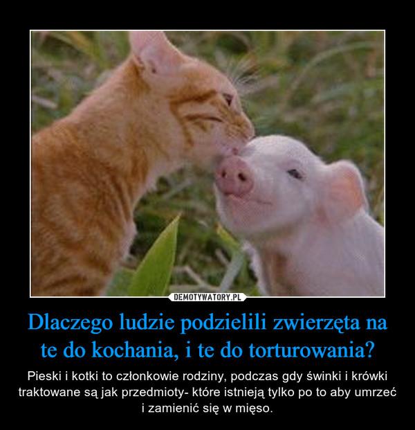 Dlaczego ludzie podzielili zwierzęta na te do kochania, i te do torturowania? – Pieski i kotki to członkowie rodziny, podczas gdy świnki i krówki traktowane są jak przedmioty- które istnieją tylko po to aby umrzeć i zamienić się w mięso.