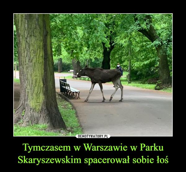Tymczasem w Warszawie w Parku Skaryszewskim spacerował sobie łoś –