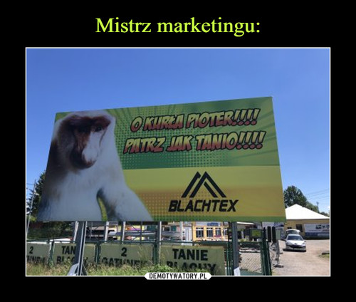 Mistrz marketingu: