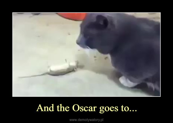 And the Oscar goes to... –