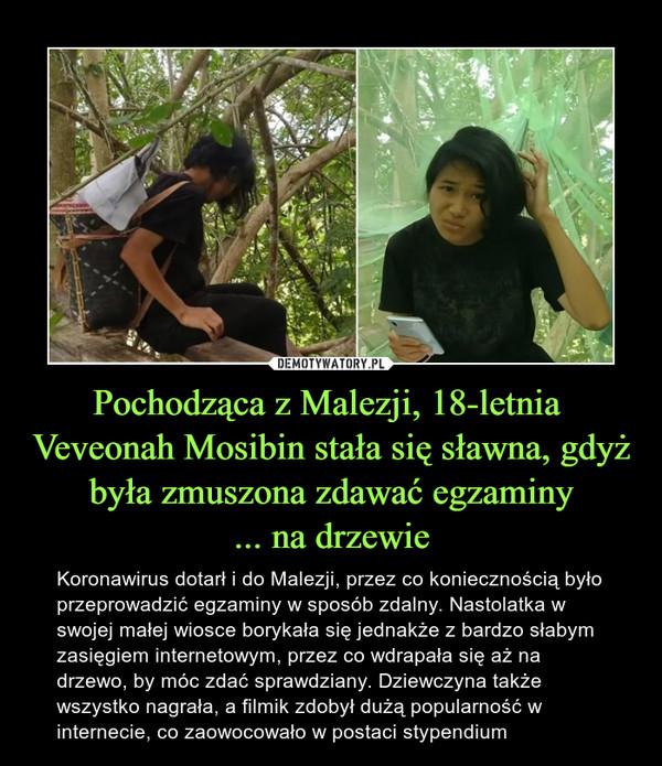 Pochodząca z Malezji, 18-letnia  Veveonah Mosibin stała się sławna, gdyż była zmuszona zdawać egzaminy... na drzewie – Koronawirus dotarł i do Malezji, przez co koniecznością było przeprowadzić egzaminy w sposób zdalny. Nastolatka w swojej małej wiosce borykała się jednakże z bardzo słabym zasięgiem internetowym, przez co wdrapała się aż na drzewo, by móc zdać sprawdziany. Dziewczyna także wszystko nagrała, a filmik zdobył dużą popularność w internecie, co zaowocowało w postaci stypendium