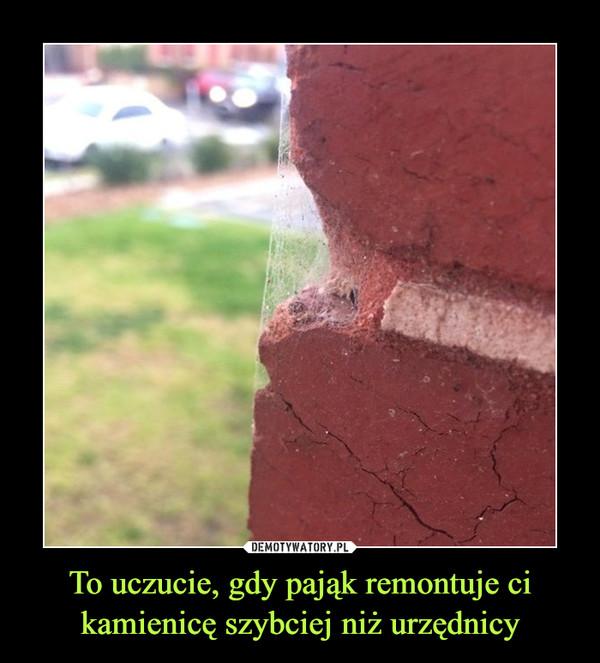 To uczucie, gdy pająk remontuje ci kamienicę szybciej niż urzędnicy –