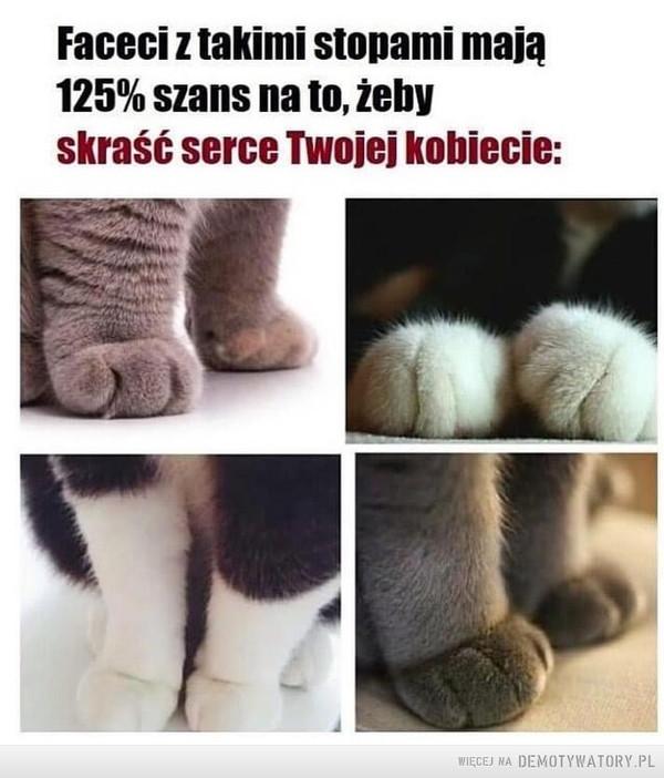 Koty –  Faceci z takimi stopami mają 125% szans na to, żeby skraść serce Twojej kobiecie: