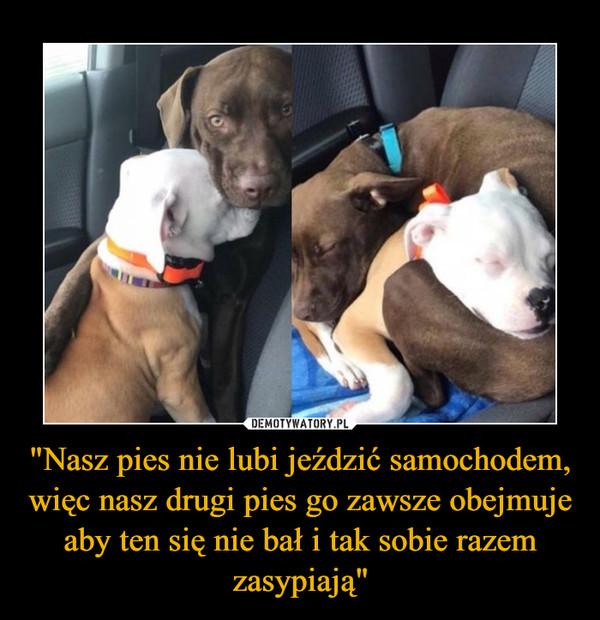 """""""Nasz pies nie lubi jeździć samochodem, więc nasz drugi pies go zawsze obejmuje aby ten się nie bał i tak sobie razem zasypiają"""" –"""