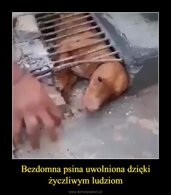 Bezdomna psina uwolniona dzięki życzliwym ludziom –