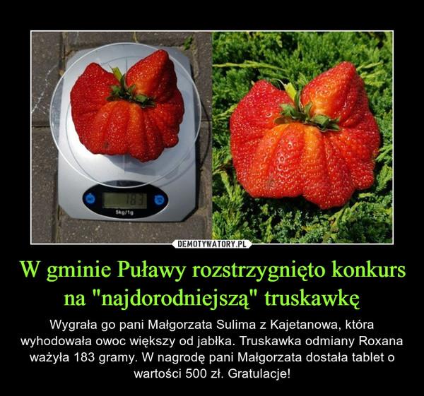 """W gminie Puławy rozstrzygnięto konkurs na """"najdorodniejszą"""" truskawkę"""