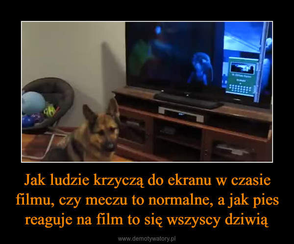 Jak ludzie krzyczą do ekranu w czasie filmu, czy meczu to normalne, a jak pies reaguje na film to się wszyscy dziwią –