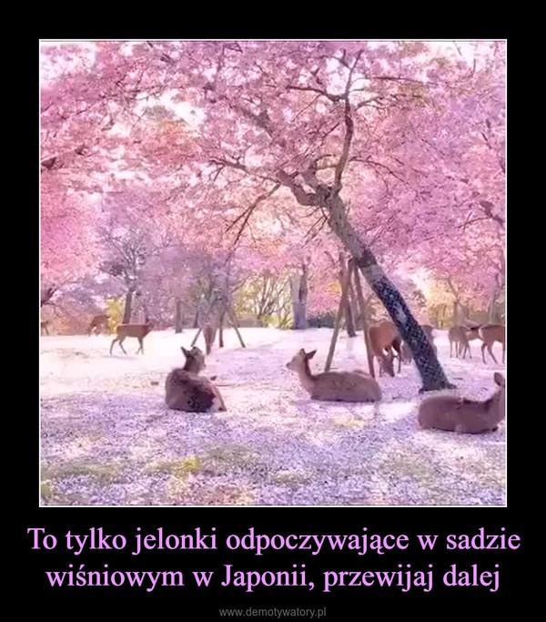 To tylko jelonki odpoczywające w sadzie wiśniowym w Japonii, przewijaj dalej –
