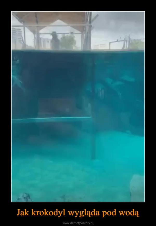 Jak krokodyl wygląda pod wodą –