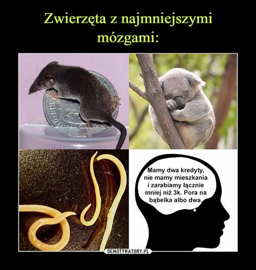 Zwierzęta z najmniejszymi mózgami: