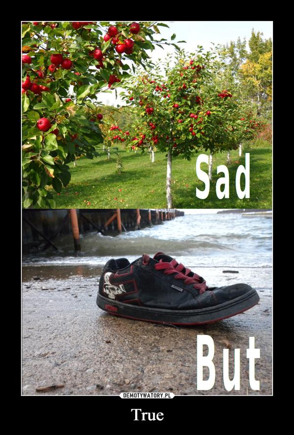 True –  Sad But
