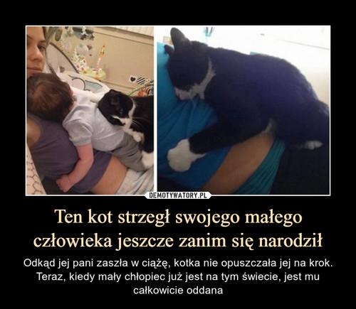 Ten kot strzegł swojego małego człowieka jeszcze zanim się narodził