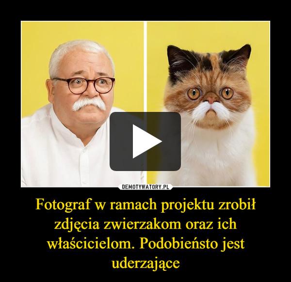 Fotograf w ramach projektu zrobił zdjęcia zwierzakom oraz ich właścicielom. Podobieństo jest uderzające –