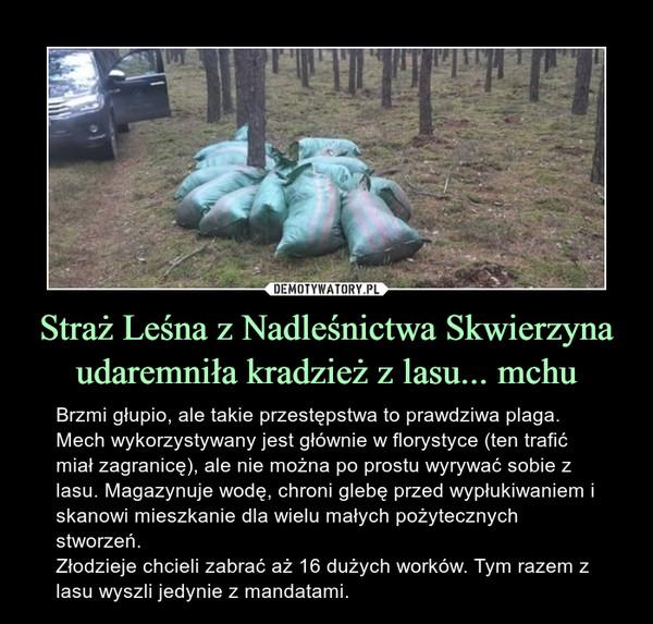 Straż Leśna z Nadleśnictwa Skwierzyna udaremniła kradzież z lasu... mchu – Brzmi głupio, ale takie przestępstwa to prawdziwa plaga. Mech wykorzystywany jest głównie w florystyce (ten trafić miał zagranicę), ale nie można po prostu wyrywać sobie z lasu. Magazynuje wodę, chroni glebę przed wypłukiwaniem i skanowi mieszkanie dla wielu małych pożytecznych stworzeń. Złodzieje chcieli zabrać aż 16 dużych worków. Tym razem z lasu wyszli jedynie z mandatami.