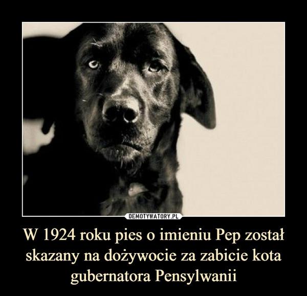 W 1924 roku pies o imieniu Pep został skazany na dożywocie za zabicie kota gubernatora Pensylwanii –