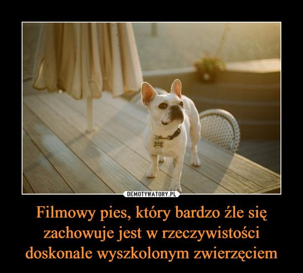 Filmowy pies, który bardzo źle się zachowuje jest w rzeczywistości doskonale wyszkolonym zwierzęciem –