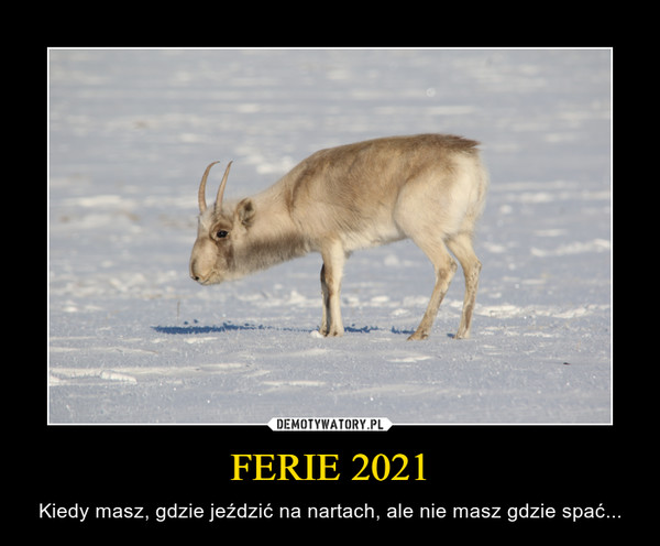 FERIE 2021 – Kiedy masz, gdzie jeździć na nartach, ale nie masz gdzie spać...
