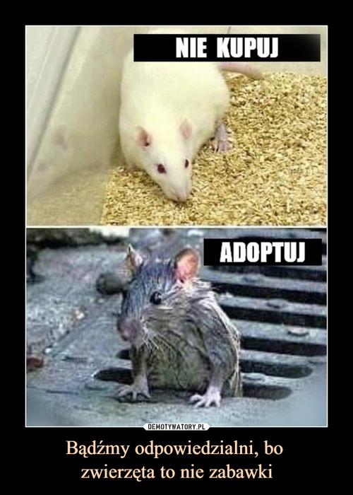 Bądźmy odpowiedzialni, bo  zwierzęta to nie zabawki