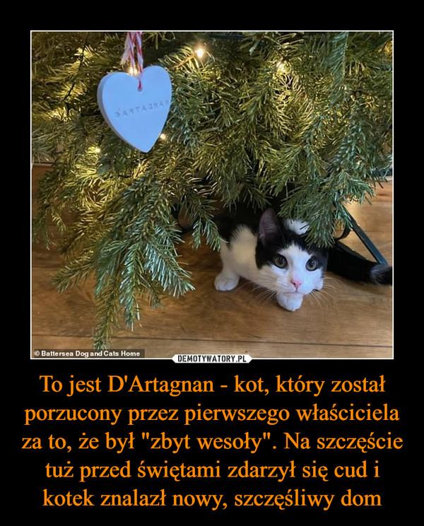 """To jest D'Artagnan - kot, który został porzucony przez pierwszego właściciela za to, że był """"zbyt wesoły"""". Na szczęście tuż przed świętami zdarzył się cud i kotek znalazł nowy, szczęśliwy dom –"""